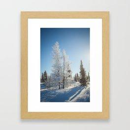 Snowy Tamaracks on a Sunny Day Framed Art Print