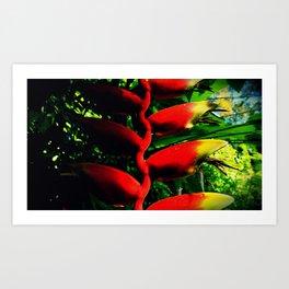 Colors of the Tropics Art Print