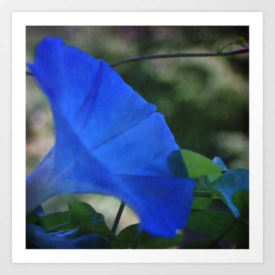 Morning Blues Art Print