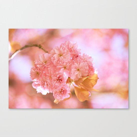 Sakura - Cherryblossom - Cherry blossom - Pink flowers 2 Canvas Print