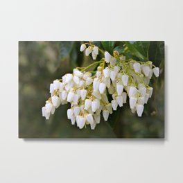 White Bells Metal Print