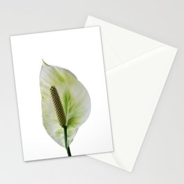 Peace Lily on White #1 #floral #decor #art #society6 Stationery Cards