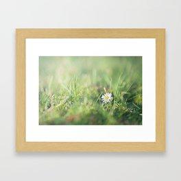 Daisy flower in the field Framed Art Print