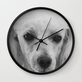 White Toy Poodle Dog Wall Clock