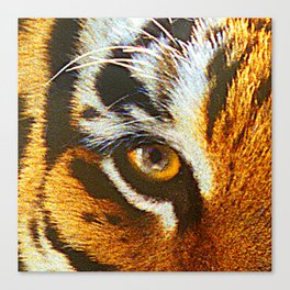 Real Tiger Eye! Up Close and Very Personal Canvas Print