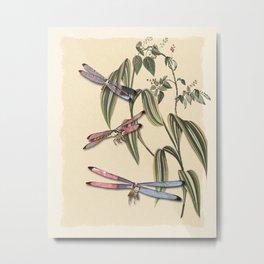 Dragonflies (A Study) Metal Print