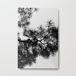 Pine Tree Black & White Metal Print