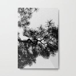 Pine Tree Black & White Metal Print