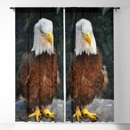 Southern Bald Eagle Blackout Curtain