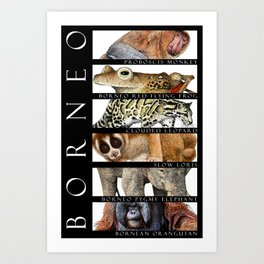 Animals of Borneo Art Print