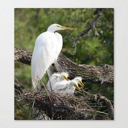 Snowy Egret Family Canvas Print