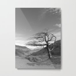 Lonely Cardrona Metal Print