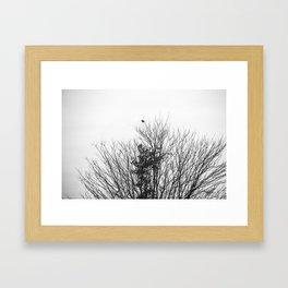 B&W Bird Framed Art Print