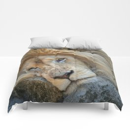 Resting White Lion Comforters