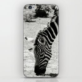Black & White Zebra in Black & White iPhone Skin