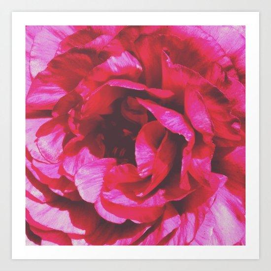 Rosey Rose Art Print