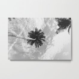 Palm Trees on the San Blas Islands, Panama 2, Black & White Metal Print