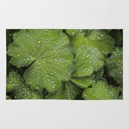 Water drops on fresh green Leaf Rug