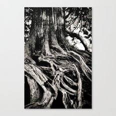 Beauty in the old Canvas Print
