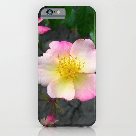 wild rose IV iPhone & iPod Case