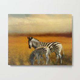 Zebra Family Metal Print
