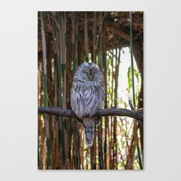 Ural owl resting on a branch Canvas Print