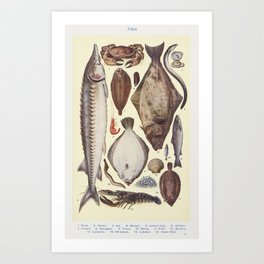 Fish II Crab Oyster Eel Mussel Lemon Sole Halibut Prawn Sturgeon Trout Sprat Brill Escallop Lamprey Art Print