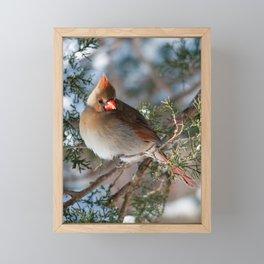 First Winter (Female Cardinal) Framed Mini Art Print
