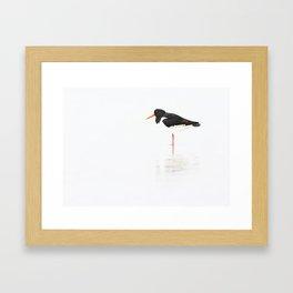 scholeksters scholekster high key oystercatcher  Framed Art Print