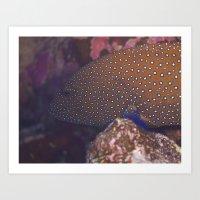 Blue Spotted Grouper Art Print