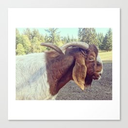 jake the goat Canvas Print