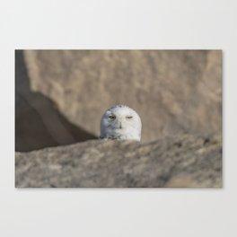 Peekaboo Snowy Owl Canvas Print