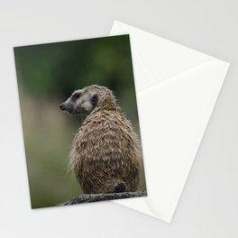 Meerkat 3 Stationery Cards