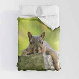 Relaxed Squirrel Comforters
