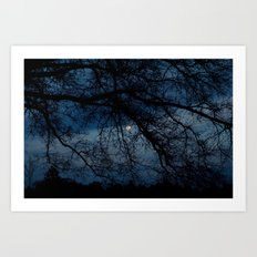 Through the Branches Art Print