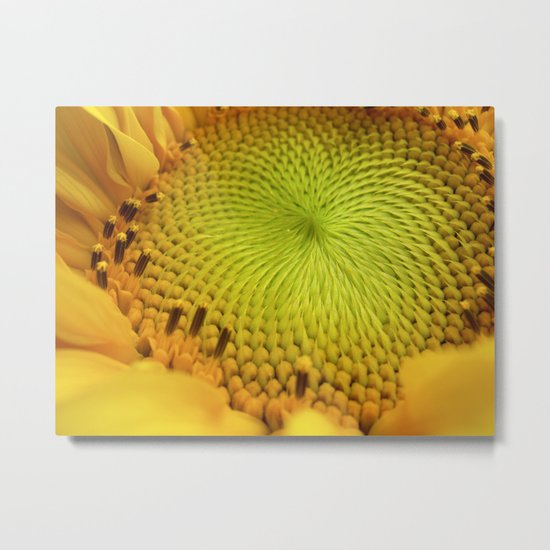 sunflower heart II Metal Print