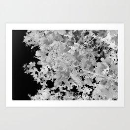 Abstract Tree Landscape Dark Botanical Art Black Noir Art Print