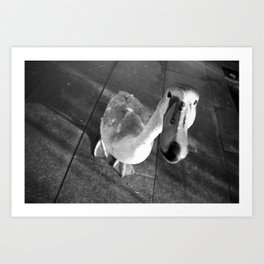 Young swan in Dublin street  Art Print