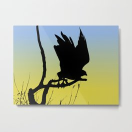 Red-tailed Hawk Taking Flight Silhouette at Sunrise Metal Print