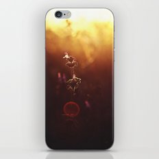 Phi // The Golden Ratio iPhone & iPod Skin