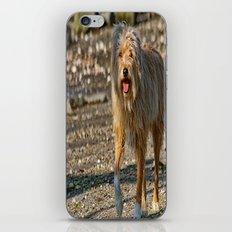 Beach Bum iPhone & iPod Skin