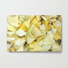 Yellow Ginkgo Leaves Metal Print