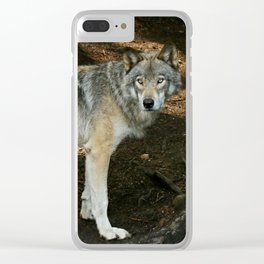 The wise wolf Clear iPhone Case