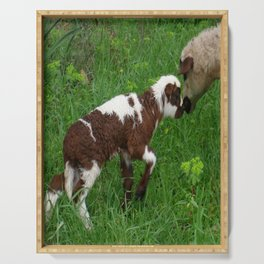 Cute Brown and White Lamb with Ewe  Serving Tray