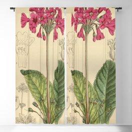 Primula miyabeana 141 8606 Blackout Curtain