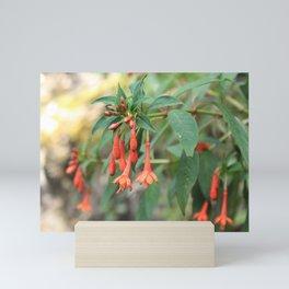 Fuchsia alpestris Mini Art Print