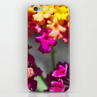ombre iPhone & iPod Skins featuring Ombre by Darkest Devotion