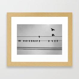 pigeons hanging out Framed Art Print