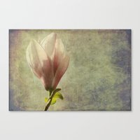 magnolia Canvas Prints featuring magnolia by John Beswick