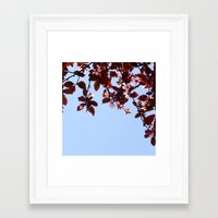 cherry blossom Framed Art Prints featuring Cherry Blossom by madbiffymorghulis